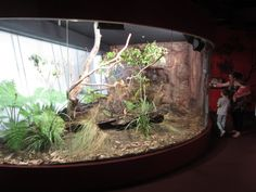 Are you thinking of buying a tortoise to keep? Tortoise pet care takes some planning if you want to be. Reptile Zoo, Reptile House, Reptile Habitat, Reptile Cage, Reptile Enclosure, Terrariums, Terrarium Reptile, Aquarium Terrarium, Terrarium Ideas