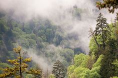 Great Smokey Mountains by Phyllis Taylor
