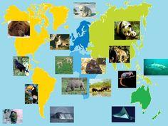 animais em vias de extinção - Pesquisa do Google