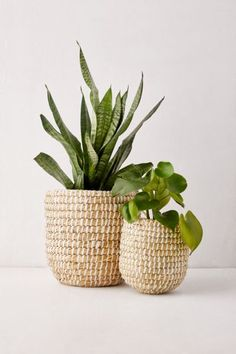 Provide boho appeal to sunlit corners of your area when you house your own favorite ferns in this particular basket woven planter. **Content + Care** - Seagrass - Wipe clean -- Imported **Size** - Little dimensions: 7 Plant Basket, Basket Planters, Indoor Planters, Wicker Baskets, Planter Pots, Picnic Baskets, Indoor Gardening, Baskets For Plants, Wicker Planter