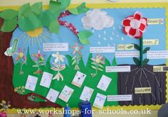 ks1 plants and animals display - Google Search