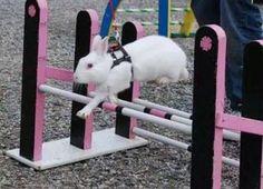 Kaninhop / Rabbit / Bunny