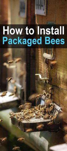 How to Install Packaged Bees. If you are thinking about getting into beekeeping, it's important that you read this article first. You will get an idea of what you will need to be successful and the type of success you can have with packaged bees. Bee Hive Plans, Beekeeping For Beginners, Raising Bees, Backyard Beekeeping, Backyard Chickens, Homestead Survival, Survival Prepping, Save The Bees, Bees Knees