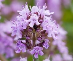 Partial Shade Perennials - Great Choices for Problem Areas | Perennial Flowers
