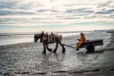 Assistere alla pesca dei gamberetti a cavallo sul mare del Nord era un nostro sogno...le Fiandre ce lo hanno realizzato, e qui ve ne raccontiamo la magia.
