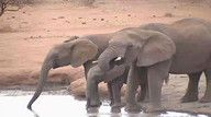 Pete's Pond is a waterhole on Mashatu Game Reserve in Botswana, Africa. It is a famous webcam that began...