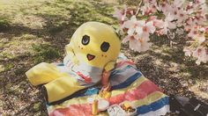 いいね!488件、コメント40件 ― 【公式】ふなっしー公式 映像配信サービス「274ch.」さん(@274ch_official)のInstagramアカウント: 「今日はお花見日和だったなっしなー。274ch.のロケで今年最後の桜を堪能したなっしー!なっちゃんで泥酔しちゃったなっしー (。・ω・。) #274ch #funassyi #ふなっしー #ロケ #花見」