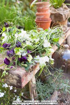 garden bench via Garden Flow Edible Garden, Garden Pots, Violet Garden, Small Moments, Horticulture, Garden Inspiration, Beautiful Gardens, Gardening Tips, Flower Pots