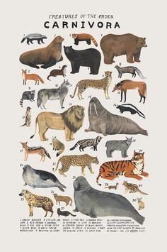 Animal Planet Kelsey Oseid