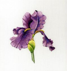 Bearded Iris-- Trish Burr