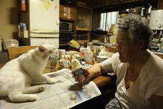 突然の別れ…あのおばあちゃんと白猫の写真が、今再び話題に。   Share News Japan   ページ 2