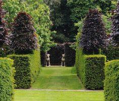 Arne Maynard - Hilborough House, Norfolk. Yew hedges topped by purple beech.
