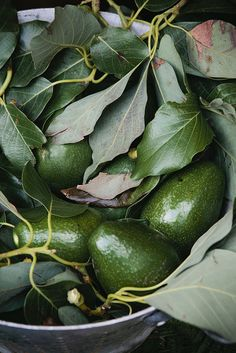 Rome, Italy, by Nicole Franzen Green Fruit, Fruit And Veg, Fruits And Vegetables, Food Styling, Food Photography Styling, Avocado, Gaps Diet, Greens Recipe, Nutrition