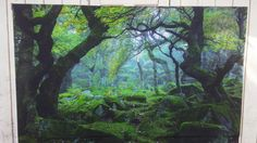 Enchanted forest Back drop for pictures or selfies. Got it off Amazon.