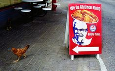 Funny Chicken #funny #funny_chicken