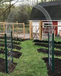 Garden Arbor, Garden Trellis, Garden Beds, Garden Cottage, Bean Trellis, Cattle Panel Trellis, Cattle Panels, Cattle Panel Fence, Farm Gardens