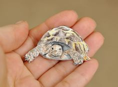 Tortoise Brooch or Necklace Hand Drawn by BattlekatsBoutique