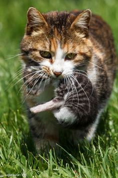 \Cats mean kittens plentiful and frequent.\ -- Doris Lessing