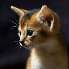 The purity of a kitten. What a sweet butter-face. #cats