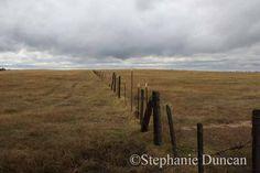 Grassy Field with Stormy Skies