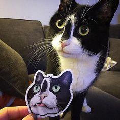 Cats & stickers  A great combination  #regram of @ssaannttiinnoo.cat @meow_york_kitties #cats #stickers #art #catart #catsofinstagram by stickermule