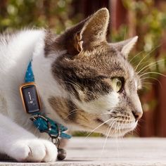 G-Paws Pet GPS Tracker at Firebox.com $81 ABOUT TIME!!!!!!
