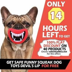 Only 14 hours is left. This is my biggest ever giveaway on my store.  40 products including this Safe Funny Squeak Dog Toys on FLAT 100% OFF .  Note: Offer is VALID only for 26th and 27th November and stock is LIMITED . So do not miss this one out. Get lucky grab your free product tomorrow.  Check the link in the bio to check the product.  P.S>>>> Tag your loved ones #goldenretrieverofinstagram #goldenretrieverclub #goldenretrieverlovers #goldenretriever_ofinstagram #goldenretrieveroftheday…