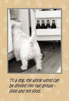 Westie Julep: What They Did & What I Did . Tessa used to do this, if the refrigerator door was open, she'd just walk right in and sniff around. Dog Photos, Dog Pictures, Cute Pictures, Westie Puppies, Westies, West Highland White, Baby Dogs, Pet Dogs, Doggies