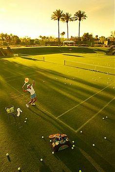 Sunshine & palm tree tennis court.