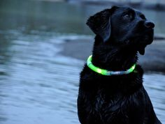 LED lighted dog collars! Perfect for when Jarvis is old enough to go camping!