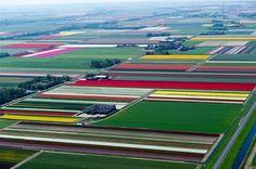 nederlandernaovan2-570x378.jpg (570×378)