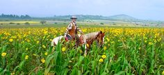 Resort Ranch vacation at Rancho Las Cascadas, State of Mexico, Mexico. One of Ranches ultimate Resort Ranch vacations Dude Ranch Vacations, Cattle Drive, Guest Ranch, Travel Videos, Top Destinations, Horse Pictures, Horseback Riding, Mexico, Cowgirls