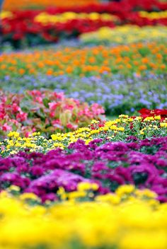 So many colors and varieties of flowers!!