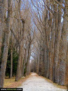 Un bucólico paseo por el bosque de Finlandia, Rascafria, Madrid #rascafria #madrid #turismo #tourism #viajes #travels #excursiones #trips #lagos #mirecreo