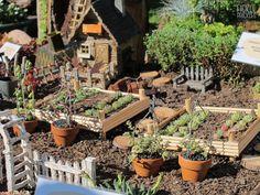 Planted into an old, rusted wheelbarrow. Wheelbarrow, Cacti And Succulents, Perth, Cactus, Miniatures, Farmhouse, Garden, Plants, Garten