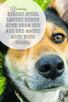    #Hund    Ideen    #Hunde    Tipps    Tricks    Ideen    Liebe    Welpen    Bilder    #Beschäftigung