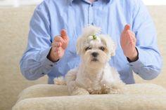 ***¿Cómo hacer Reiki en Animales?*** No solo las personas pueden beneficiarse con el Reiki, sino también los animales, las plantas y cualquier ser vivo. Descubre los beneficios de esta disciplina para tu mascota.....SIGUE LEYENDO EN...... http://comohacerpara.com/hacer-reiki-en-animales_12758h.html