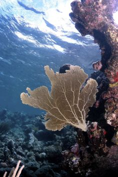 Diving in #VirginGorda  #SunsetWatchVilla sits perched above a beautiful coral reef! http://www.sunsetwatchvilla.com/