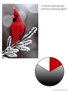 Start with Nature: A Cardinal, in Cool Colors