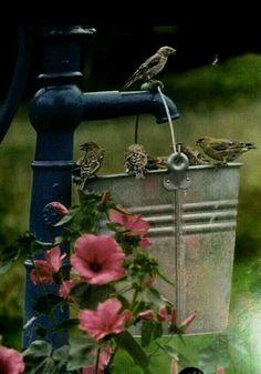 Très originale,pour attirer les oiseaux