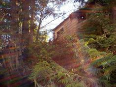 Abondoned cabin in the harbour Personal Photo, Abandoned Places, British Columbia, Places Ive Been, The Incredibles, Cabin, Plants, Photos, Beautiful