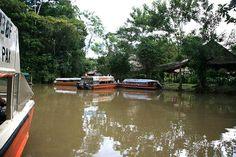Peru, Iquitos,  selva. foto de Google