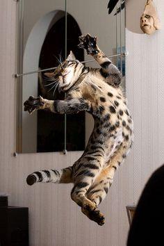 Anti-gravity Cat Enjoys a Leisure Floating Around by Prinsessa Rusalka Lumo, via Flickr