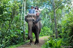 Elephant Safari Park Lodge ( Bali, Indonesia ) , Experience what it's like to ride a gentle giant. Bali Elephant, Elephant Ride, Bali Lombok, Elephant Pictures, Bali Holidays, Park Lodge, Ubud, Day Tours, Historical Sites