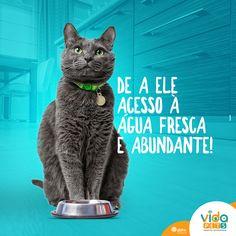 Social Media - Vida Pets on Behance Social Media Art, Social Media Design, Ads Creative, Creative Artwork, Poster Design Inspiration, Happy Animals, Animal Design, Behance, Funny Pets