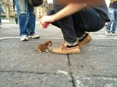 Probably the one of the smallest dog in the world.