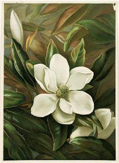Коллекция картинок: Старинные цветочные литографии 1