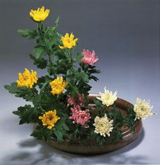 """The traditional color scheme in Moribana (the arrangement of the flowers in wide, shallow containers) is a technique by which color is brought out based on set rules for materials as well as the method of arrangement. By definition, this technique is less subjective than the """"realistic method"""" which takes context into consideration, to include season and the impressions of the arranger."""