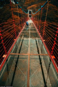 New glass-bottomed bridge in Taiwan rewards thrill-seeking tourists Glass Bridge, Rope Bridge, Places To Travel, Places To Visit, Suspension Bridge, China Travel, Travel News, Colored Glass, Travel Around