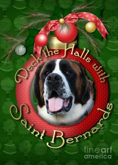 Deck the halls with Saint Bernards